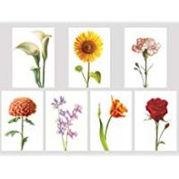 Greeting Cards Traditional Floral collection x 7 - Beautiful selection of Seven Blank Greeting Cards. Flowers