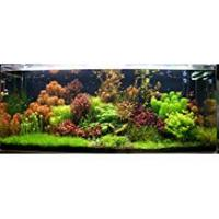 Tropical Fish 50 Live Aquarium Plants Tropical Aquatic Plants for your fish tank